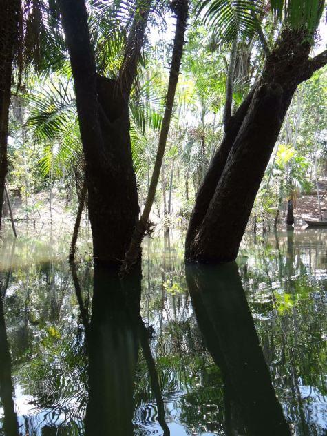 floresta-encantada