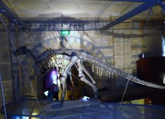 museu-historia-natural-lonrdres-2