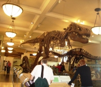 museu-historia-natural-NYC-4