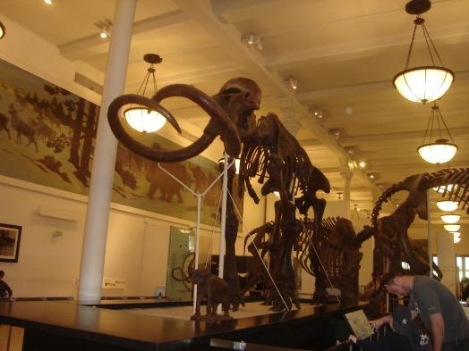museu-historia-natural-NYC-5