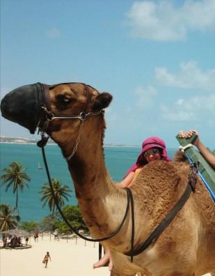 passeio-de-camelo-genipabu