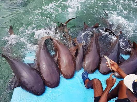 oceanário em isla del rosario alimentação de animais