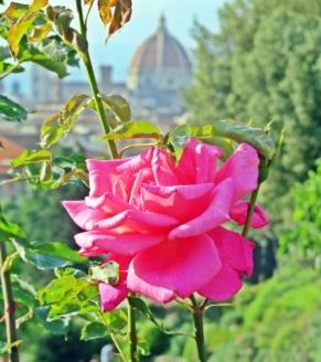 florença-jardim-rosas