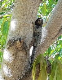 macaco-eco-park