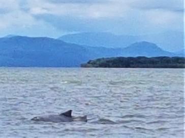 golfinho-passeio-barco