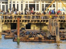 colônia de leões marinhos