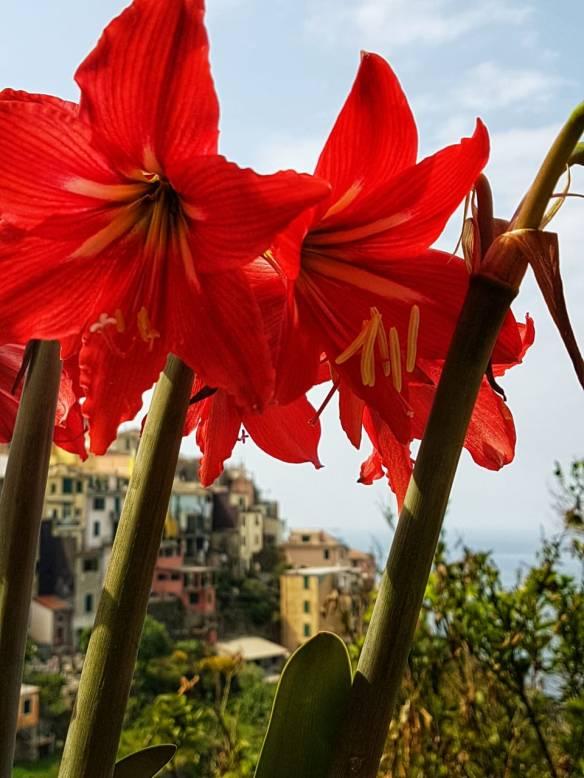 Manarola vista por trás de flores em Corniglia