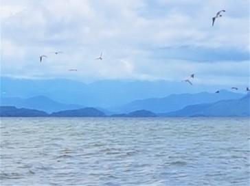 baía-golfinhos-aves2
