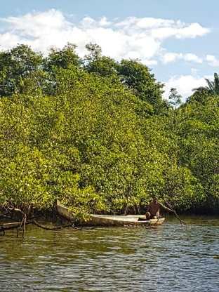 península-de-maraú-passseio-ilhas-vegetação