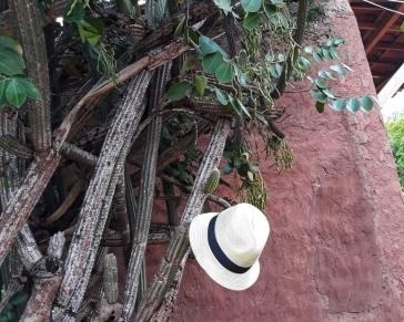 cânion-do-xingó-caatinga