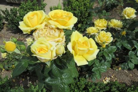parque-del-retiro-rosaleda-flores